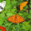 Varicoloured butterflies — Stock Photo #3403378