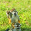 Stock Photo: Macaques