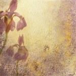 Iris Stationary or Background — Stock Photo