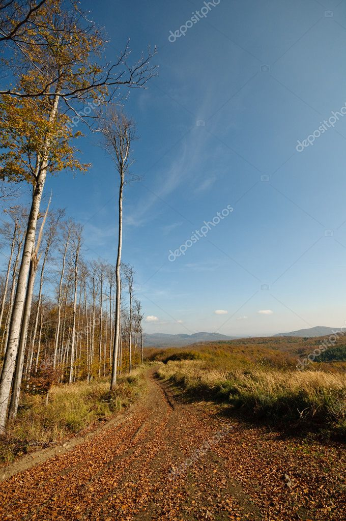 Autumn pathway with blue sky — Stock Photo #2898928