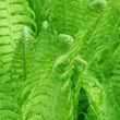 Detail of a fern - Stock Photo