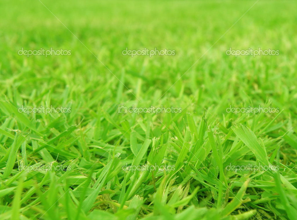 Very close macro detail of green grass in middle of summer — Stock Photo #3205447