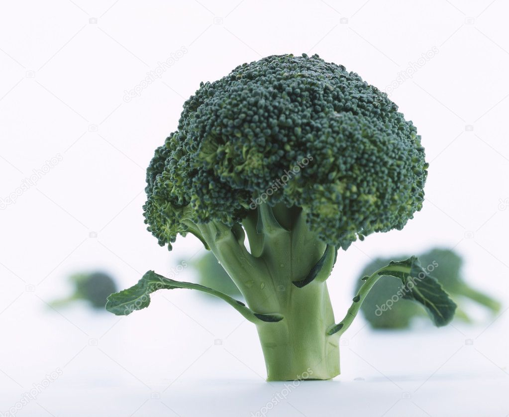 Head of fresh broccoli on white  Stock Photo #3406521