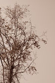Sepia tree — Stock Photo