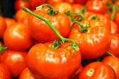 Red tomatoes — Stockfoto