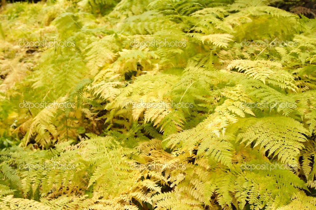 A bunch of green and lush ferns  Stock Photo #3721768