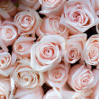 Pink roses — Stock Photo #3179961