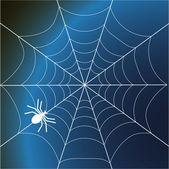 Spider web — Stock Vector