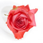 Rose — Stock Photo #2975261