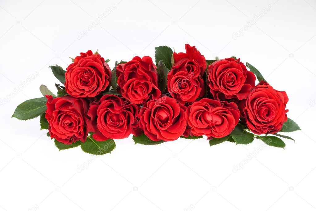 Red roses set in row on isolated studio background  Stock Photo #2975294