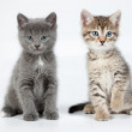 Little Kittens — Stock Photo