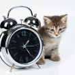 Little Kitten And Alarm Clock — Stock Photo