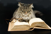 Cat, Book and Glasses — Stock Photo