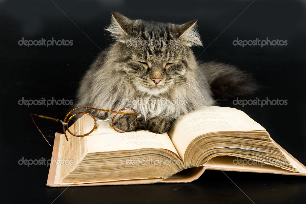 Fluffi Siberian cat, glasses and book — Stock Photo #3116927