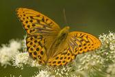 Butterfly orange — Stock Photo