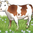Stock Vector: Cow