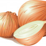 Fresh bulbs of onion — Stock Vector #2934768