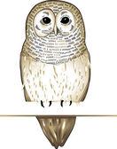 Fogy owl — Stock Vector
