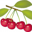 Stock Vector: Cherry