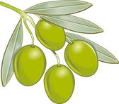 Olive vector — Stock Vector