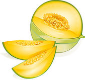 Melon — Stock Vector