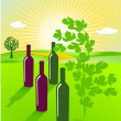 To grow wine — Stock Vector