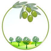 Olives unique landscape — Stock Vector