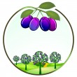 Stock Vector: Plum cultivation