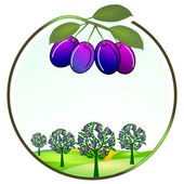 Plum cultivation — Stock Vector