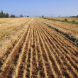View on field whereupon harvest — Stock Photo #3041799