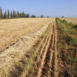 View on field whereupon harvest — Stock Photo