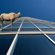 Rhino standung on skyscraper windows — Stock Photo