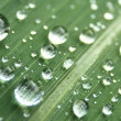 Stock Photo: Water drops background