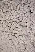 Dry background — Stock Photo