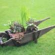 Wheelbarrow — Stock Photo #2842114