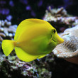 Yellow exotic fish - Stock Photo