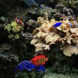 Aquarium background — Stock Photo