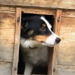 Dog in her house — Stock Photo