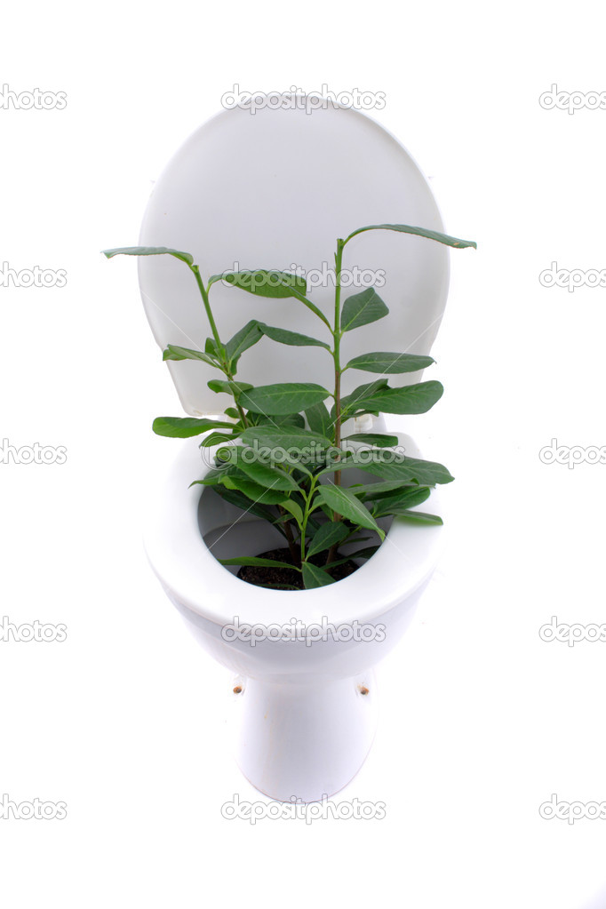 Gardening at toilet isolated on the white background  Stock Photo #3617149