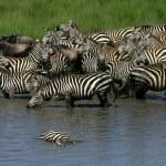 Down at the River, Tanzania — Stock Photo
