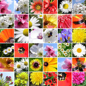 Lente collage. — Stockfoto