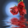 Bouquet from three red roses and moon. — Stockfoto #2936348