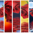 Stock Photo: Vertical banners with red roses