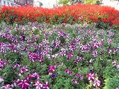 City flowers — Stock Photo