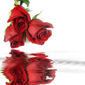 Red roses reflection in water — Stock Photo