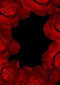 Mooie rode rozen schijnt — Stockfoto