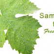 Grape leaves with drops - card — Stock Photo
