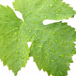 Stock Photo: Grape leaves on a white 2
