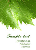 Grape leaves with drops - card 2 — Stock Photo