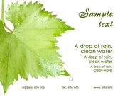 Calling card. Wet grape leaves isolated — Stock Photo